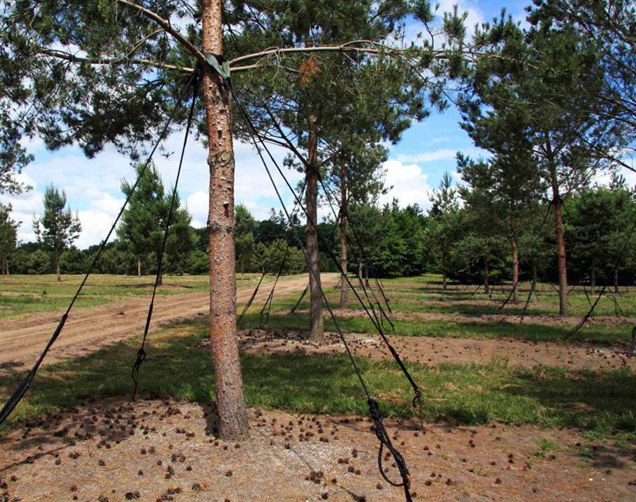 Крепление для деревьев